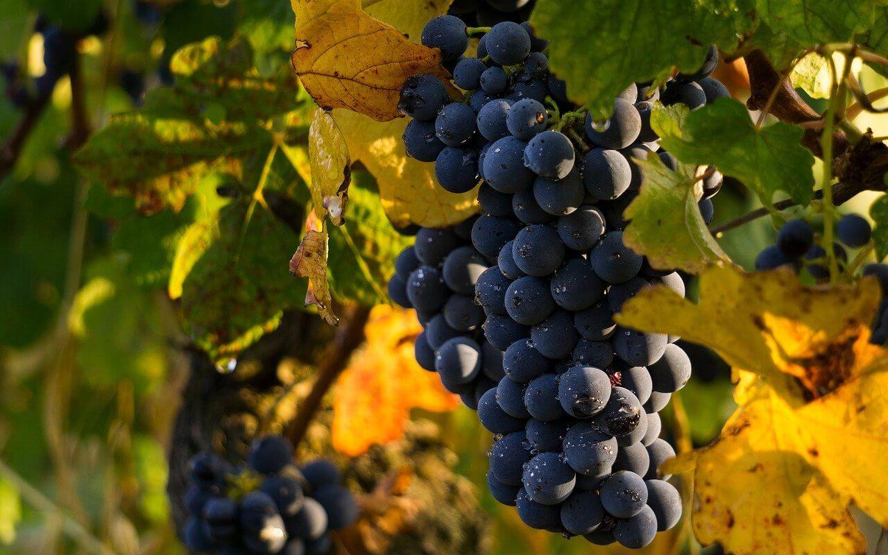 Comment le vin est-il fabriqué ?